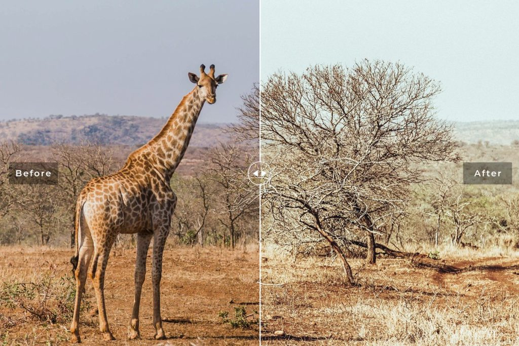 Пресет Safari для Lightroom